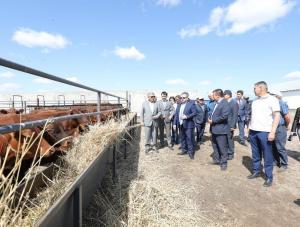 5,7 млрд тенге выделили на развитие животноводства Актюбинской области в 2019 г